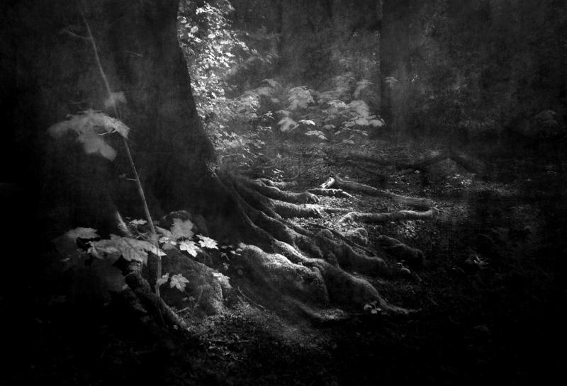 Dark-Roots