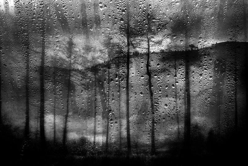 Forest-Rainscape-