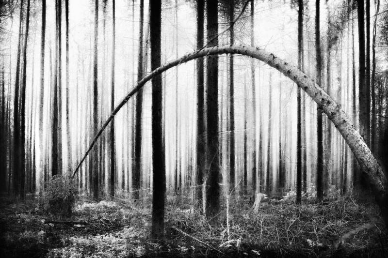 Walking-in-Woodland-42