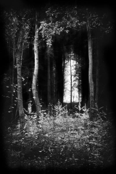Walking-in-Woodland-No.5