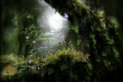 Forest-11