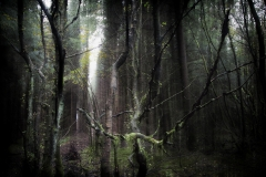 Forest-14
