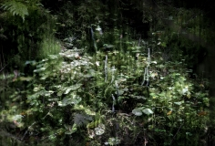 Forest-7