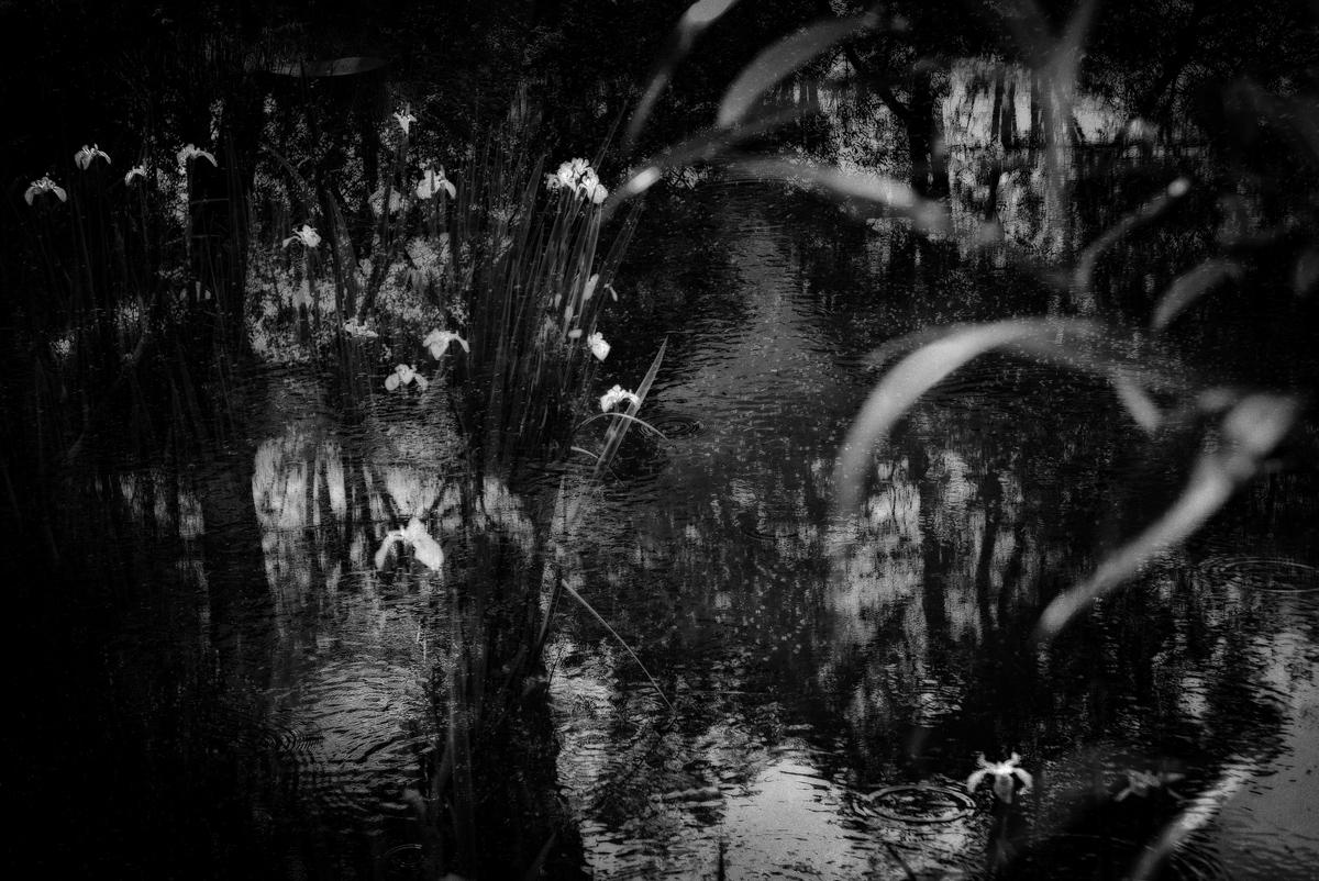 Pond 7