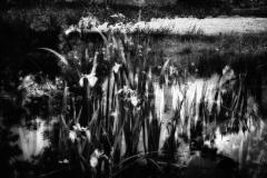 Pond 6