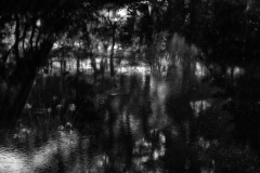 Pond 8