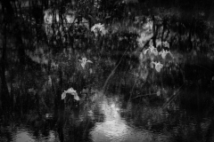 Pond11