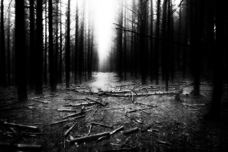 Walk-in-Woodland-24
