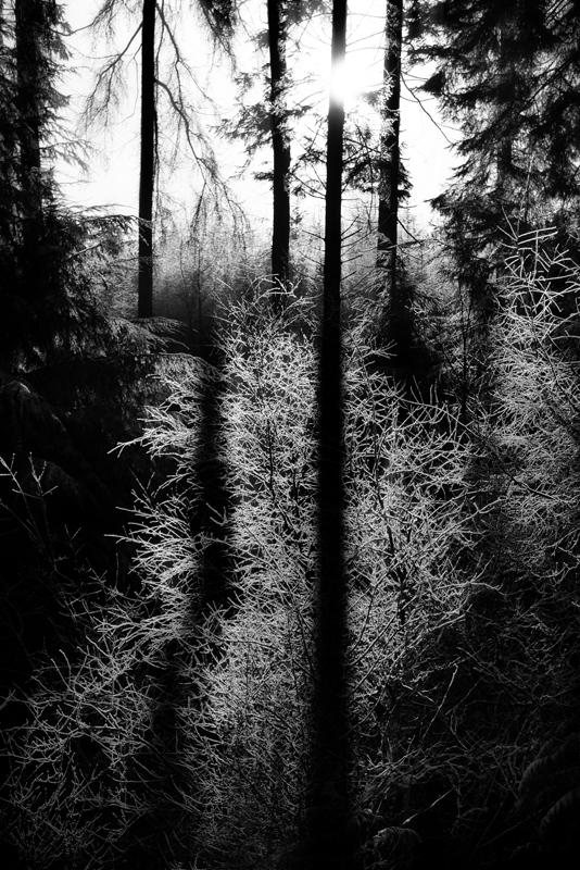 Walking-In-Woodland-26