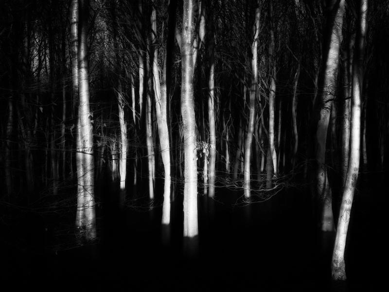 Walking-In-Woodland-30