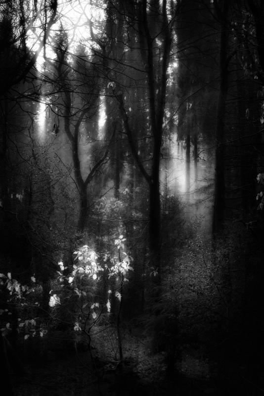 Walking-in-Woodland-16
