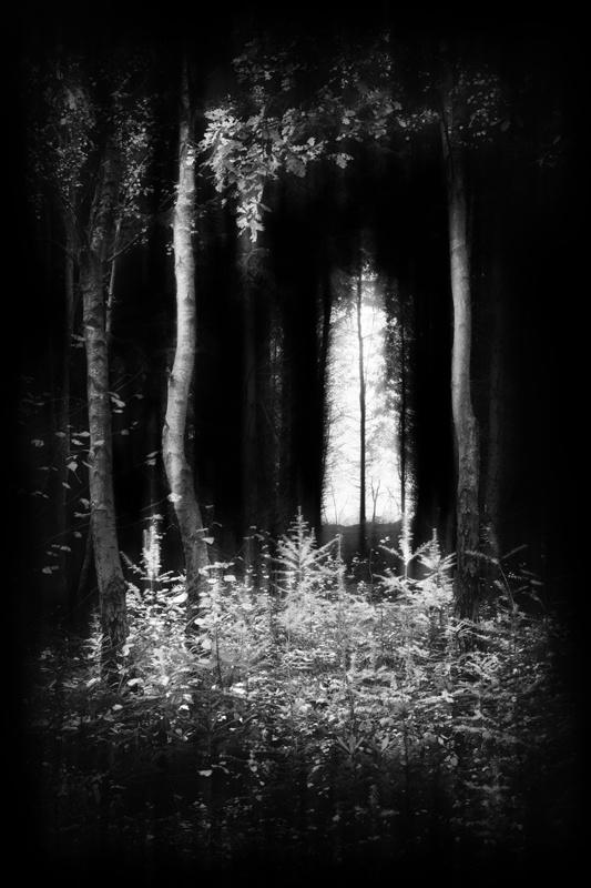 Walking-in-Woodland-32