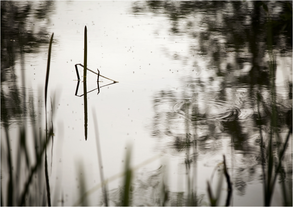 Still reflections on the surface of a pond
